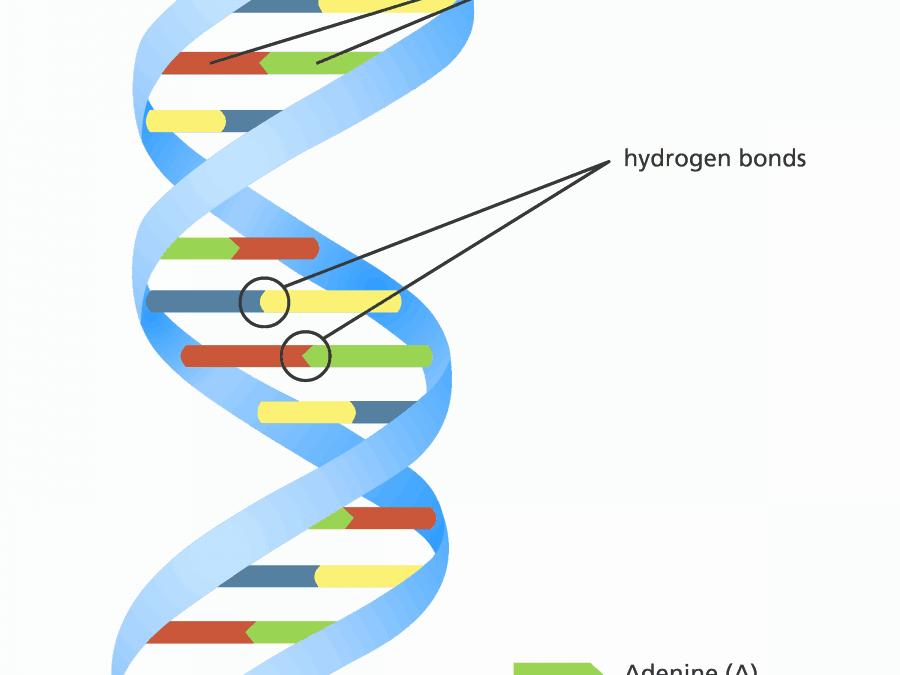 Hoe overleef ik mijn DNA-profiel!